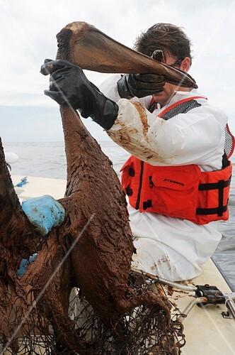 Gulf of Mexico oil spill rescue,2010