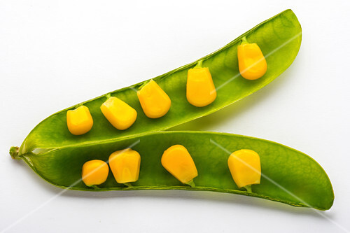 Plant genetics,conceptual image