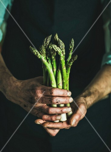 Bunch of fresh uncooked seasonal green asparagus in dirty man's hands