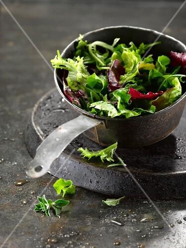 Frisch gewaschener gemischter Blattsalat
