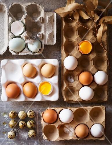 Various fresh eggs in egg boxes