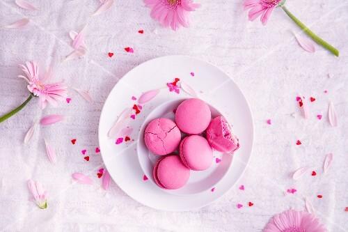 Pink macarons and pink daisies
