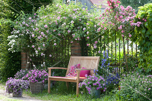 schattiger sitzplatz unter kletterrose bild kaufen 12417049 friedrich strauss. Black Bedroom Furniture Sets. Home Design Ideas