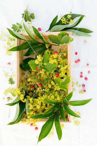 Wild strawberries, peony leaves and lady's mantel in a wooden crate