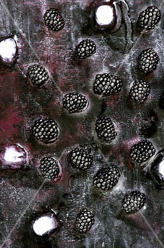 Wet berries blackberries on a dark surface