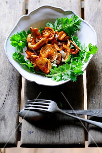Red pine mushroom salad with pimpernel