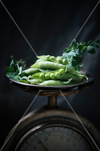 Peas and pea pods on an antique pair of scales