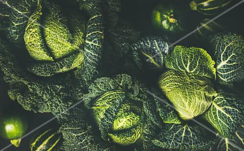 Raw fresh green savoy cabbage