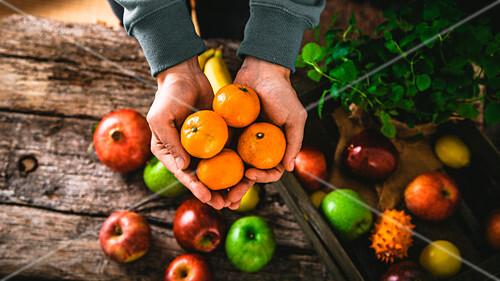 Farmer holding harvested mandarines, harvested vegetable