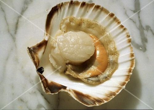 Fresh Scallop in the Shell