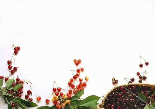 English morellos, acid cherries and black cherries