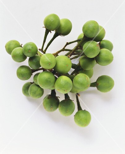 Pea aubergine (Solanum torvum)