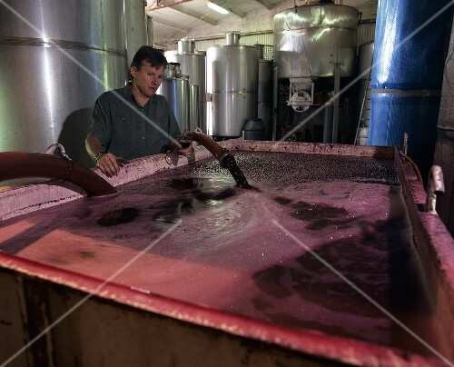 Pumping must into a fermentation tank, Trentham, Australia