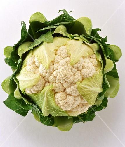A cauliflower on white background