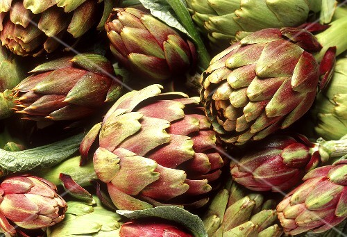 Green and purple artichokes (filling the picture)