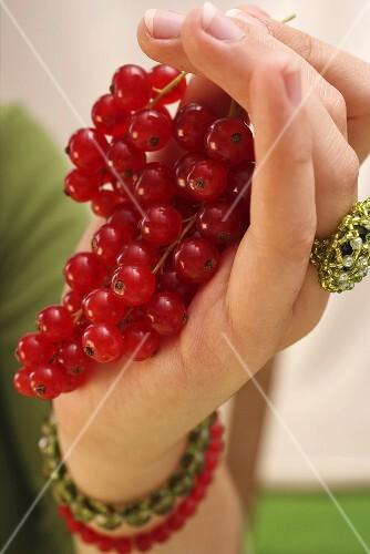 Hand holding redcurrants