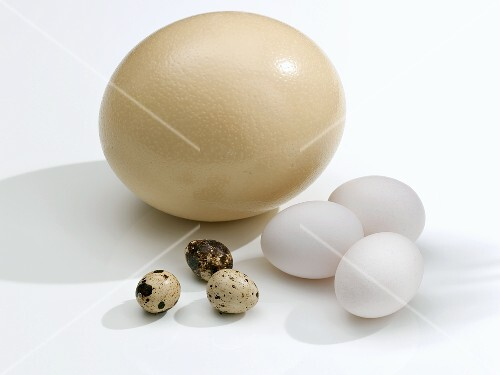 Ostrich egg, hens' eggs and quails' eggs