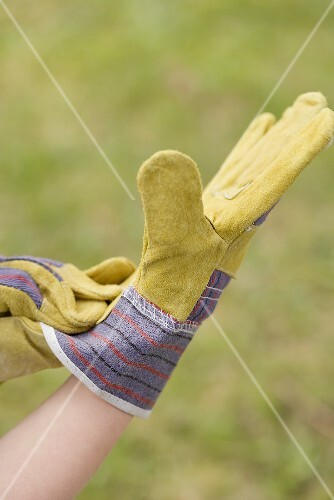 Hands in gardening gloves