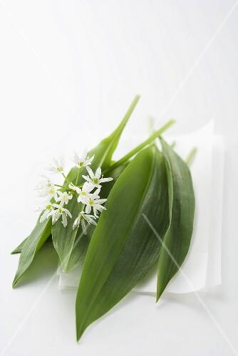Ramsons (wild garlic) leaves and flower
