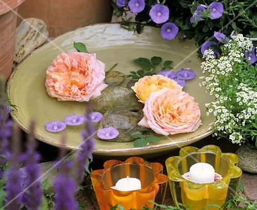 Bowl of 'David Austin' roses