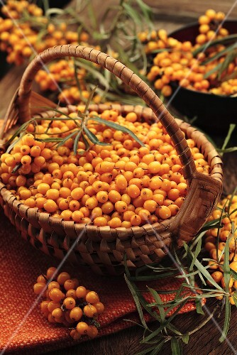 Fresh sea buckthorn berries in basket