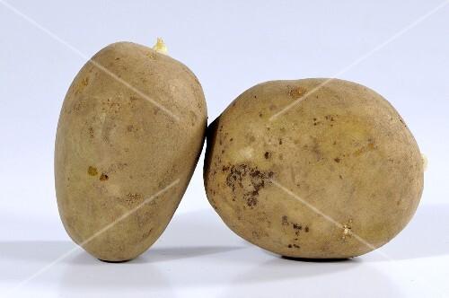 Two potatoes (variety 'Adretta')