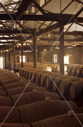 Historic barrique chai, Yalumba Winery, Barossa Valley, Australia