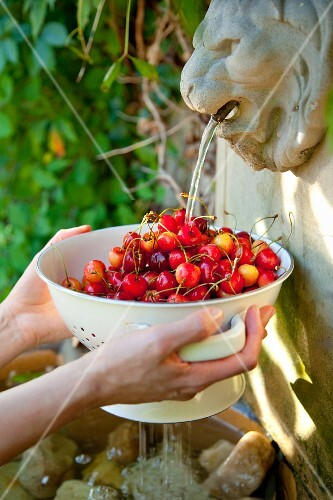 Hands holding a sieve of cherries in a fountain