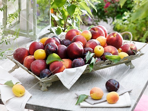 Nectarines, peaches, yellow and purple plums, apricots