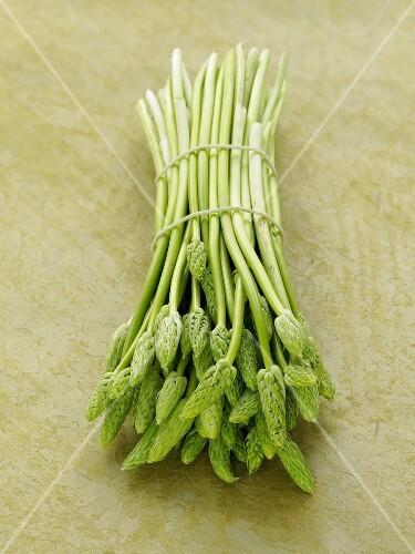 A bundle of wild asparagus