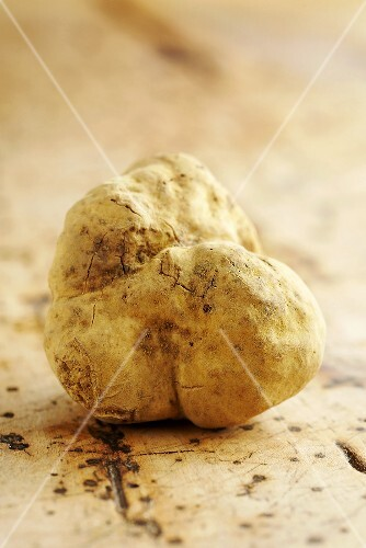 A white Alba truffle on a wooden background