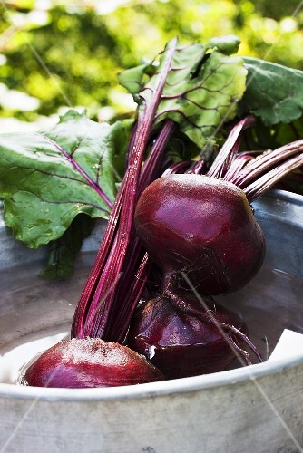 Fresh beetroot being washed outside
