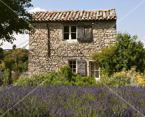 A lavender field and a stone house near Vaison-La-Romaine, Provence