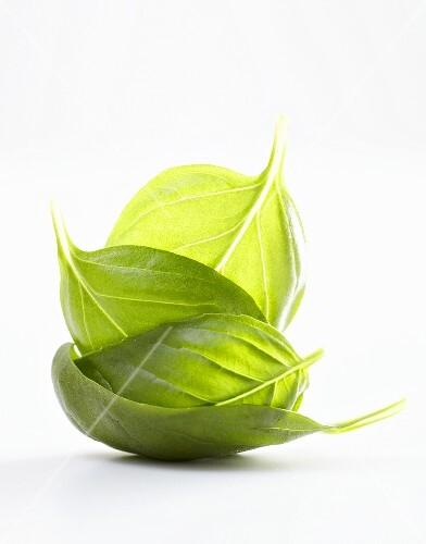 Four basil leaves