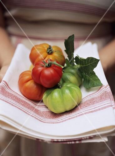 Beefsteak tomatoes on a tea towel