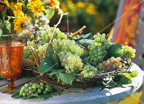 Grapes in wrought iron basket out of doors