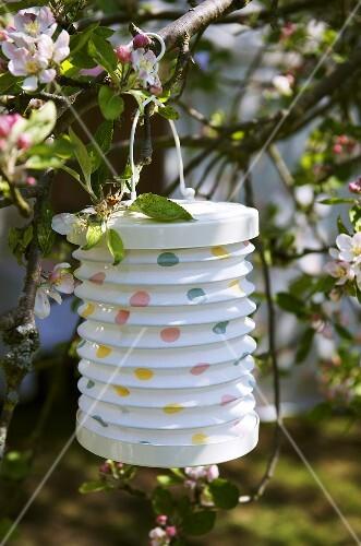 Chinese lantern hanging on cherry tree