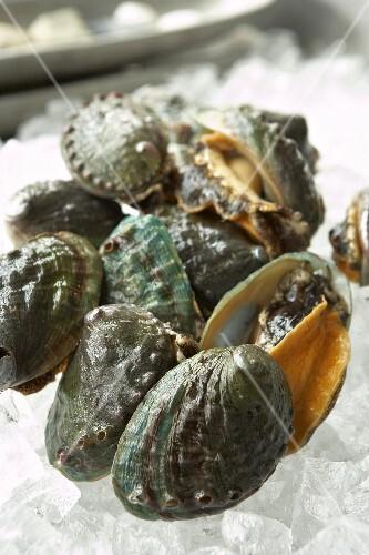 Lebende Abalone auf Eis