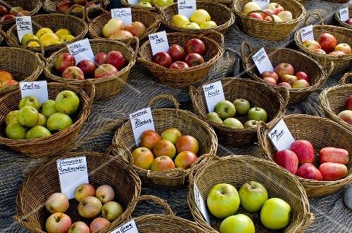 Baskets of different regional apple varieties