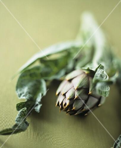 An artichoke with leaf
