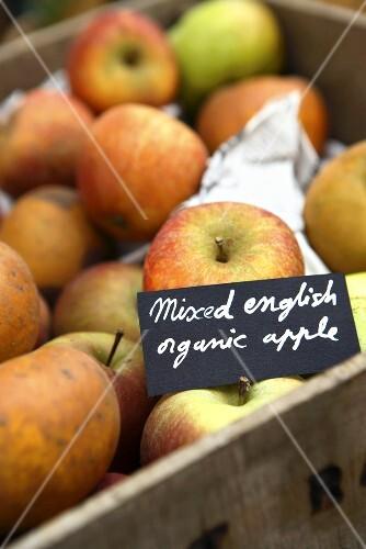 Verschiedene Bio-Äpfel aus England