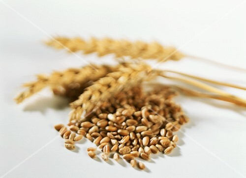 Wheat corns and ears