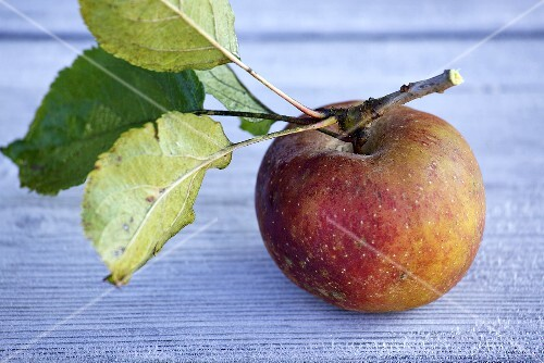 A Boskop apple with stalk and leaves