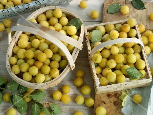 Fresh mirabelles in baskets