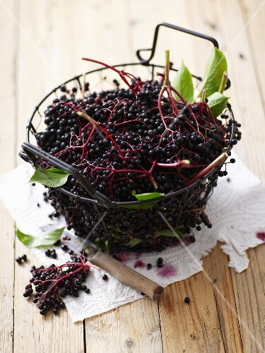 Fresh elderberries in a wire basket