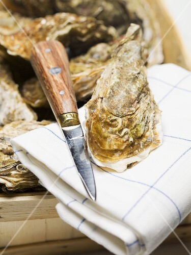 Oysters in woodchip basket and on tea towel with knife