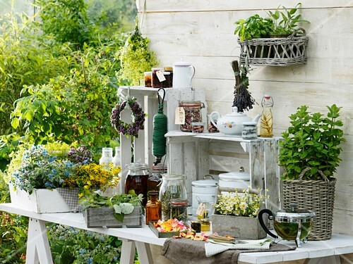 Various herbs on work table by garden shed