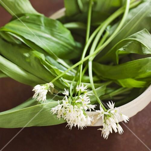 Ramsons (wild garlic) with flowers