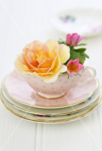 Rose blossoms in a pink tea cup