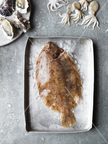 Plaice, squid and oysters